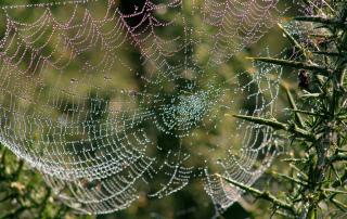 web__4